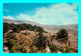 A747 / 187  LIBAN Les Cedres - Liban
