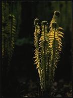 Farn Im Frühling  -  DJH / Deutsche Jugend Herberge  -  Ansichtskarte Ca. 1983    (10246) - Botanik