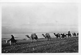 Jordanie)   A Camel's  Caravan Along The Lake Side - Jordanie