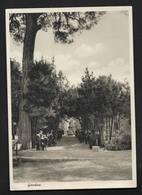Giardino Istituto Magistrale Femminile Dorotea Villa B. Paola Frassinetti Roma Italie Italia - Carte Postale écrite - Enseignement, Ecoles Et Universités