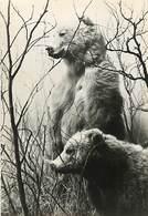 Gd Format :environ15cms X10cms -ref Y550- Ours Brun D Alaska  -publicité Santé Laboratoires Roland Marie De Montreuil - - Ours
