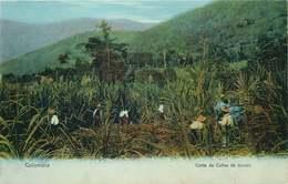 COLOMBIE   Corte De Canas De Tzucar - Colombie