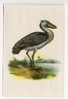 Bunte Vögel Aus Aller Welt (1953) - I.24 - Schuhschnabel, Balaeniceps Rex, Shoebill, Bec-en-sabot Du Nil - Cigarette Cards