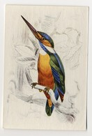 Bunte Vögel Aus Aller Welt (1953) - II.17 - Eisvogel, Alcedo Ispida, Kingfisher, Martin-pêcheur, IJsvogel - Cigarette Cards