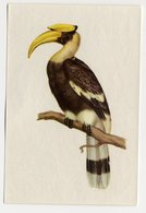 Bunte Vögel Aus Aller Welt (1953) - II.20 - Dobbelhornvogel, Great Hornbill, Calao Bicorne, Neushoornvogel, Buceros - Cigarette Cards