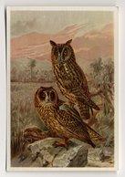 Bunte Vögel Aus Aller Welt (1953) - II.23 - Waldohreule, Sumpfeule, Owl, Ransuil, Hibou, Asio Otus - Cigarette Cards