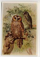 Bunte Vögel Aus Aller Welt (1953) - II.24 - Waldkauz, Bosuil, Tawny Owl, Chouette Hulotte, Strix - Cigarette Cards