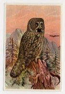 Bunte Vögel Aus Aller Welt (1953) - II.25 - Bartkauz, Laplanduil, Chouette Lapone, Great Grey Owl, Strix - Sigarette