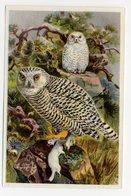 Bunte Vögel Aus Aller Welt (1953) - II.26 - Snee-Eule, Sneeuwuil, Harfang Des Neiges, Snowy Owl, Bubo - Cigarette Cards