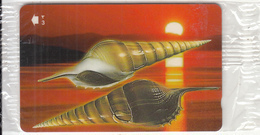 OMAN(GPT) - Seashells Of OMAN/Tibia Insulaechorab Curta, CN : 52OMNG(normal 0), 04/01, Mint - Oman