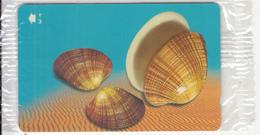 OMAN(GPT) - Seashells Of OMAN/Callista Erycina, CN : 52OMNH, 04/01, Mint - Oman