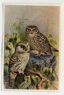 Bunte Vögel Aus Aller Welt (1953) - II.27 - Steinkauz, Steenuil, Chevêche D'Athéna, Little Owl - Cigarette Cards