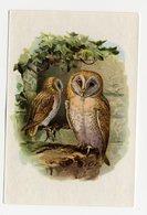 Bunte Vögel Aus Aller Welt (1953) - II.28 - Schleiereule, Kerkuil, Effraie Des Clochers, Barn Owl, Tyto Alba - Cigarette Cards