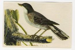 Bunte Vögel Aus Aller Welt (1953) - II.68 - Samtkopf-Grasmücke, Kleine Zwartkop, Fauvette Mélanocéphale - Cigarette Cards