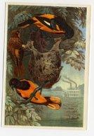 Bunte Vögel Aus Aller Welt (1953) - II.113 - Baltimoretrupial, Baltimoretroepiaal, Oriole De Baltimore, Baltimore Oriole - Cigarette Cards