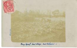 LAOS - Carte Photo  SARAVANE - écrite En 1907 Par Le Chef Du Bureau Militaire De La Garde Indigène- Texte Document - Laos