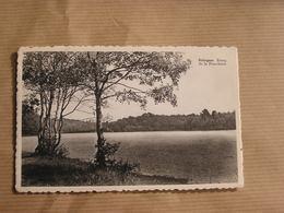 SELOIGNES Etang De La Fourchinée Commune De Momignies Hainaut België Belgique Carte Postale Postcard - Momignies