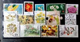 Lote De Flores/ Flowers - Vegetales