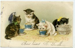 CHATS HUMANISES - Chatons Avec Ruban Au Petit Déjeuner - Dos Simple - Katzen
