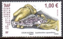 TAAF - 2013 - Poisson : Colin Austral ** - Terres Australes Et Antarctiques Françaises (TAAF)