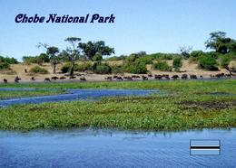Botswana Chobe National Park New Postcard - Botsuana