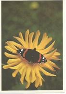 Animaux - Papillons - Papillon Sur Fleur Jaune - Papillons
