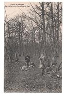 91.276 / Forêt De Sénart - La Cueillette Des Jonquilles En Mars - France