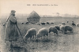 CPA - Thèmes - Agriculture - Elevage - Nos Campagnes - Un Pâtre - Elevage