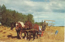 Harvest With Horses. Card Used In Denmark 1966.  A-1985 - Unclassified