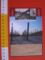 G.2 ITALIA GATTINARA VERCELLI - CARD NUOVA - 2005 CENTO ANNI TEMPESTA METEO UVA VINO WINE AGRICOLTURA VITE - ROSSA - Vigne