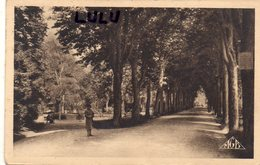 DEPT 51 : édit. Bourgogne Frère N° 126 : Chalons Sur Marne Jardin Du Jard Allée Principale - Châlons-sur-Marne