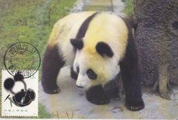 ANIMALS, MAMMALS, PANDA BEARS, CM,MAXICARD, CARTES MAXIMUM, 1995, CHINA - Ours