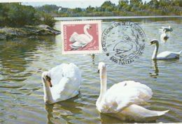 ANIMALS, BIRDS, WHITE SWAN, CM, MAXICARD, CARTES MAXIMUM, 1984, ROMANIA - Cygnes