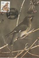 1007. BUZIN  LE JASEUR BOREAL - 1985-.. Oiseaux (Buzin)