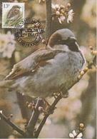 1002. BUZIN  LE MOINEAU DOMESTIQUE - 1985-.. Oiseaux (Buzin)