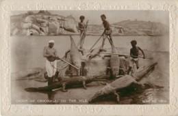 EGYPTE - LE CAIRE - GROUPE DE CROCODILES SUR LE NILE - CARTE GAUFREE - Le Caire