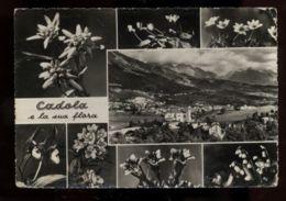C933 CADOLA E LA SUA FLORA B\N VG 1959 - Italia