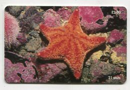 TK 00170 ISLE OF MAN - Chip Red Cushion Starfish - Isola Di Man