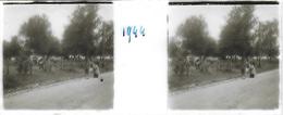 Plaque De Verre Stéréoscopique Positive - Année 1944 - Probablement Piscop - Plaques De Verre