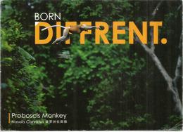 Nasique Mâle Volant D'arbre à Arbre à Bornéo., Carte Postale Adressée Andorra,avec Timbre à Date Arrivée - Malaysia
