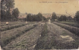 La Ferté-Alais Les Cressonnières Circulée En 1911 - La Ferte Alais