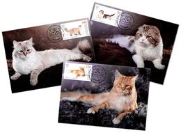 Kyrgyzstan 2019  Set 3 MC Maxi Cards Domestic Cats Cat Chats Chat - Chats Domestiques