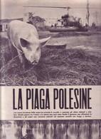 (pagine-pages)IL POLESINE   Leore1957/237. - Livres, BD, Revues