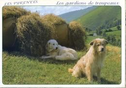 (65) Les Pyrénées  Les Gardiens De Troupeaux  (chien De Bergers  Le Patou Couché  Le Labri Assis)) - France