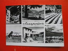 Lazaropole-ZADRUGA - Macédoine