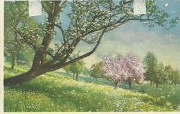 SUIZA, TARJETA POSTAL AÑO 1929 - Suiza