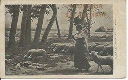 Agriculture - Elevage -dans La Campagne - Elevage