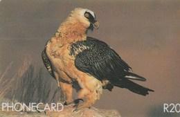 South Africa - Birds Of Prey - Bearded Vulture - Suráfrica