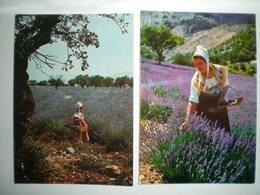 France >  [06] Alpes Maritimes > La Provence Lavande (3 Cartes) - Francia