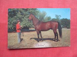 """Horse """"Citation""""   Ref 3228 - Cavalli"""